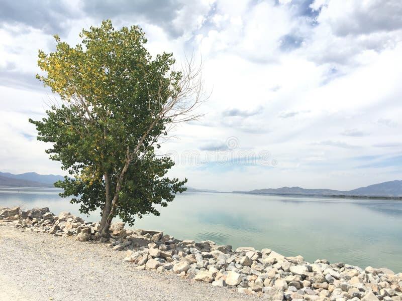 Απομονωμένο δέντρο από τη λίμνη στοκ εικόνα με δικαίωμα ελεύθερης χρήσης