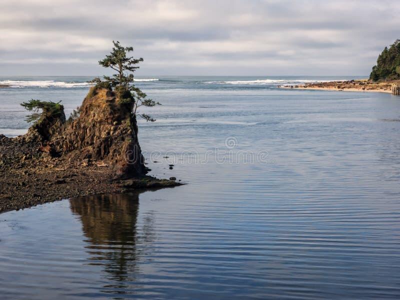 Απομονωμένο δέντρο στο βράχο στον παράκτιο κόλπο στοκ εικόνα