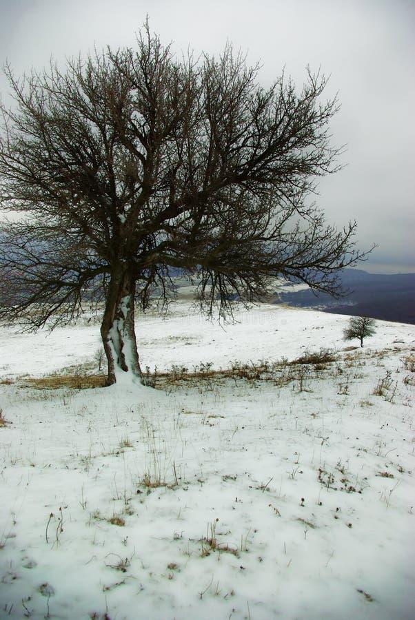 Απομονωμένο δέντρο το χειμώνα στοκ φωτογραφία με δικαίωμα ελεύθερης χρήσης
