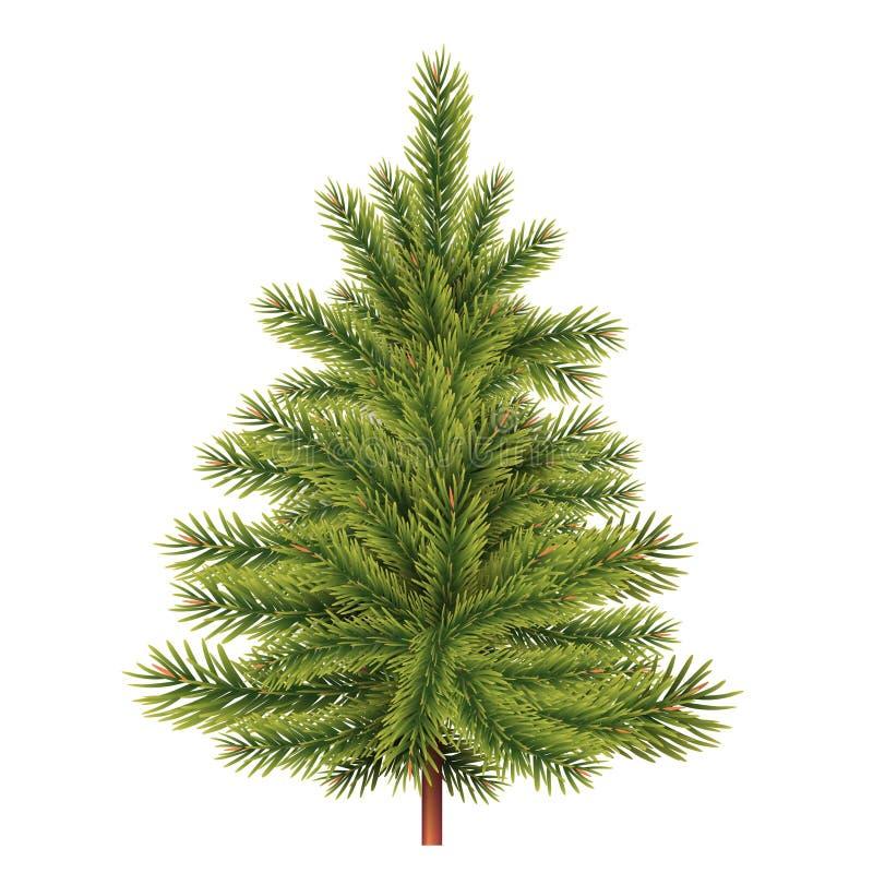 απομονωμένο έλατο λευκό δέντρων διανυσματική απεικόνιση