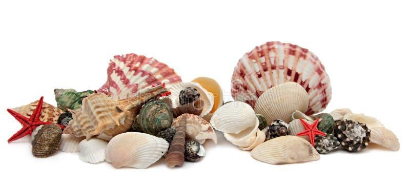 απομονωμένο ανασκόπηση λευκό θαλασσινών κοχυλιών στοκ εικόνες με δικαίωμα ελεύθερης χρήσης
