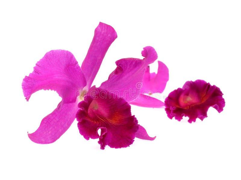 απομονωμένο ανασκόπηση orchid π& στοκ φωτογραφία με δικαίωμα ελεύθερης χρήσης