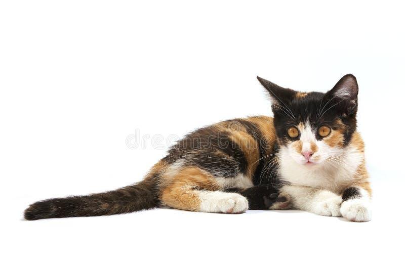 απομονωμένο γατάκι στοκ εικόνες