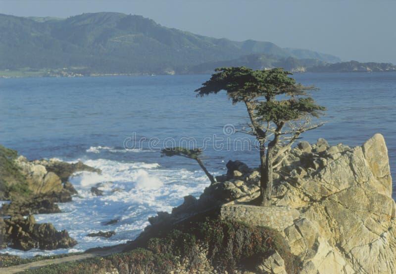 Απομονωμένο δέντρο κυπαρισσιών, παραλία χαλικιών, ασβέστιο στοκ φωτογραφία με δικαίωμα ελεύθερης χρήσης
