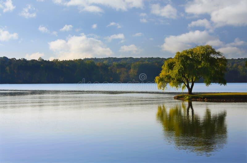 απομονωμένο δέντρο ποταμών στοκ φωτογραφία