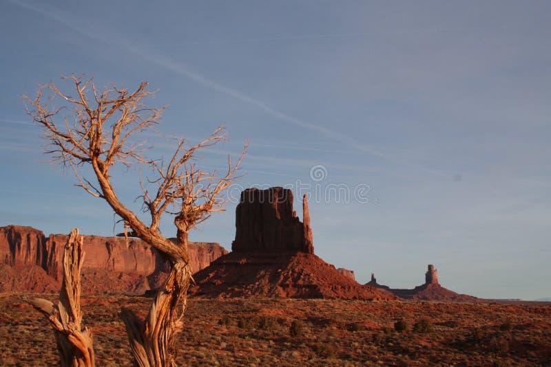 Απομονωμένο δέντρο στην κοιλάδα μνημείων στοκ εικόνες