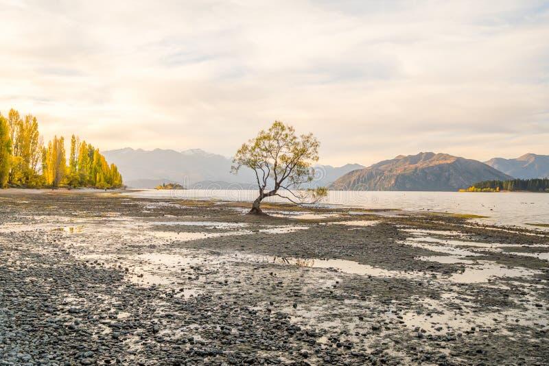 Απομονωμένο δέντρο της λίμνης Wanaka, Νέα Ζηλανδία στοκ φωτογραφίες με δικαίωμα ελεύθερης χρήσης