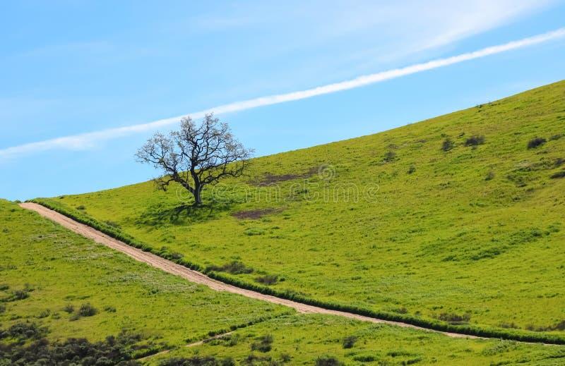 Απομονωμένο δρύινο δέντρο στη βουνοπλαγιά με τις διαγώνιες γραμμές στο ίχνος και το σύννεφο στοκ εικόνες