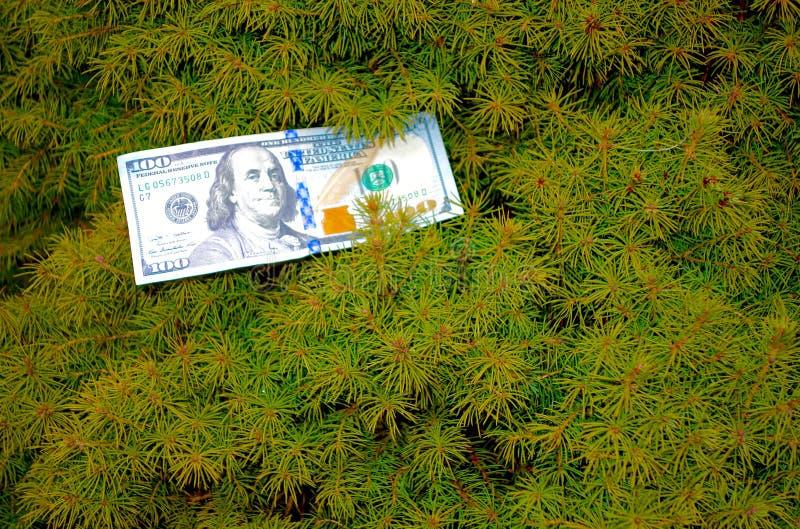 απομονωμένο λευκό δέντρων χρημάτων στοκ εικόνες