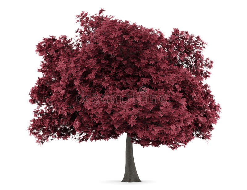 απομονωμένο λευκό δέντρω&nu απεικόνιση αποθεμάτων