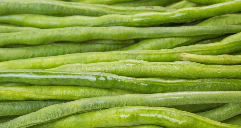 απομονωμένο λευκό ουσιών συμβολοσειράς φασολιών ανασκόπησης τρόφιμα στοκ φωτογραφίες