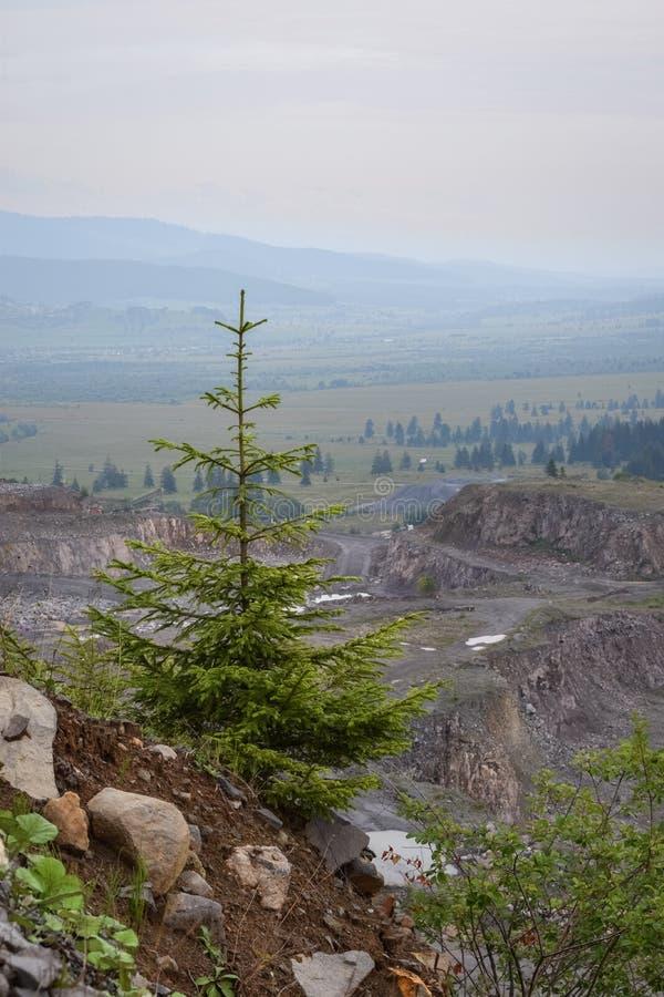 Απομονωμένο κομψό δέντρο με μια κοιλάδα πίσω στα βουνά Harghita, Ρουμανία στοκ εικόνες