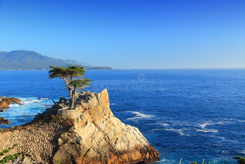 Απομονωμένο κυπαρίσσι, Καλιφόρνια στοκ φωτογραφίες με δικαίωμα ελεύθερης χρήσης