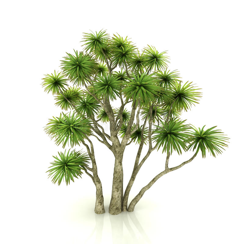 απομονωμένο λευκό δέντρω&nu ελεύθερη απεικόνιση δικαιώματος