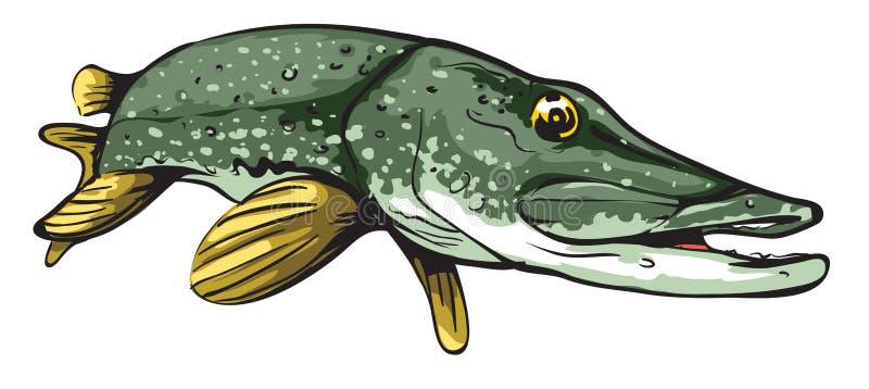 απομονωμένο λευκό λούτσων ανασκόπησης ψάρια ελεύθερη απεικόνιση δικαιώματος