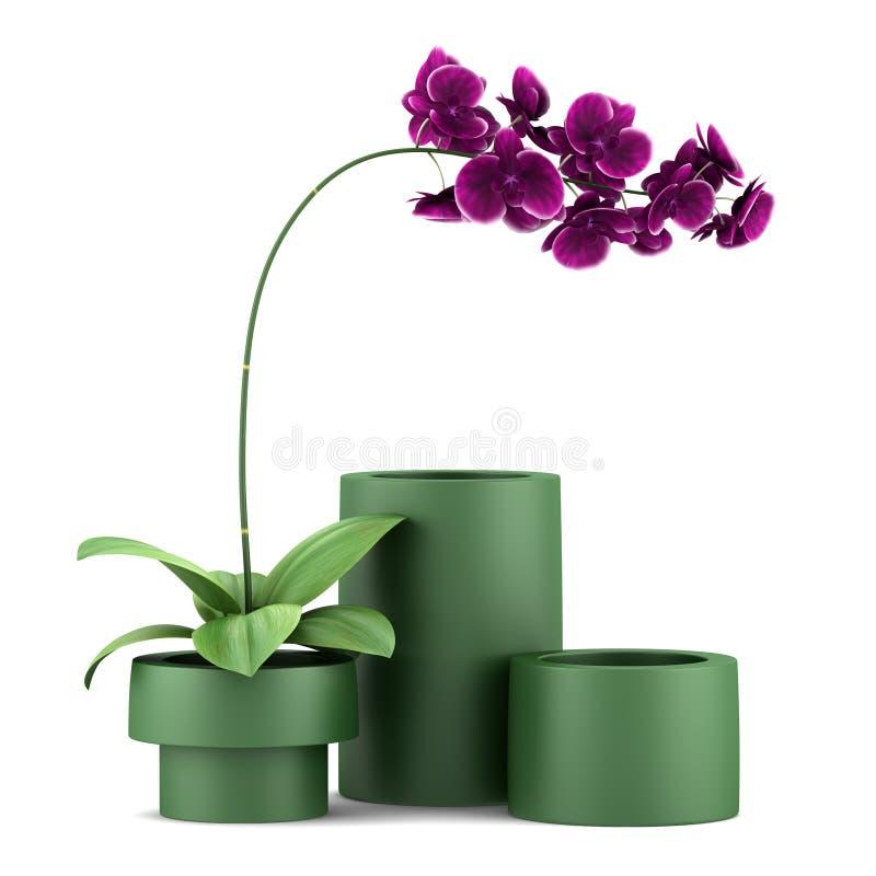 απομονωμένο λουλούδι orchid πορφυρό λευκό δοχείων διανυσματική απεικόνιση