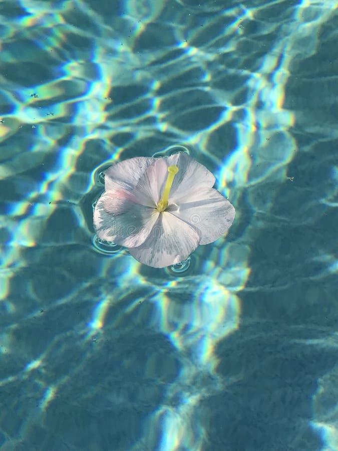 Απομονωμένο λουλούδι στοκ εικόνες με δικαίωμα ελεύθερης χρήσης