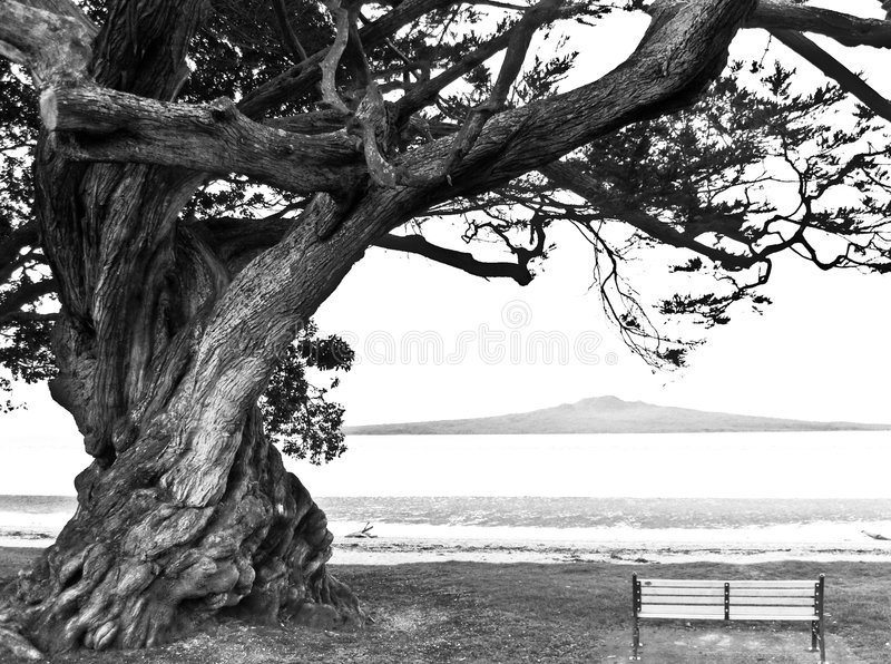 απομονωμένο παλαιό δέντρο πάγκων κάτω στοκ εικόνα