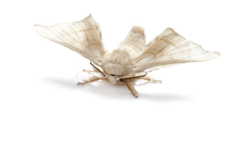 απομονωμένο πεταλούδα άσ& στοκ εικόνα