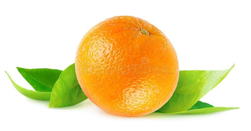 Απομονωμένο πορτοκάλι στα φύλλα στοκ φωτογραφία με δικαίωμα ελεύθερης χρήσης