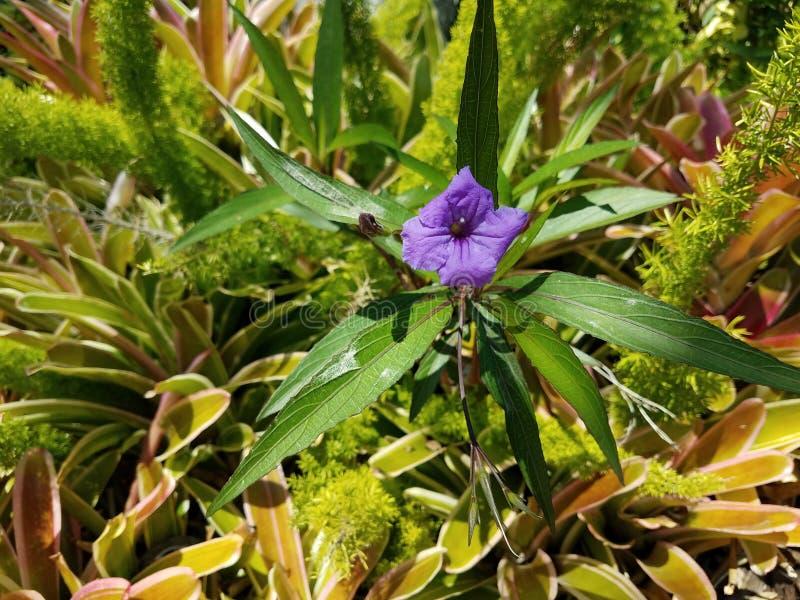 Απομονωμένο πορφυρό λουλούδι στοκ εικόνες