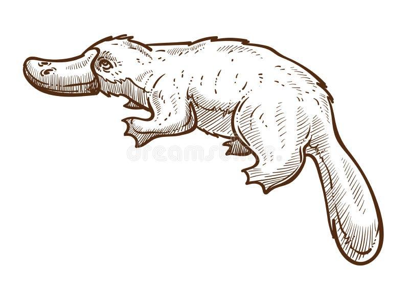 Απομονωμένο σκίτσο από δουβλίνο ή πλατύποδο, σύμβολο ζώου της Αυστραλίας απεικόνιση αποθεμάτων