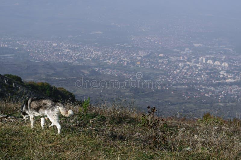 Απομονωμένο σκυλί πέρα από το skopje στοκ φωτογραφία