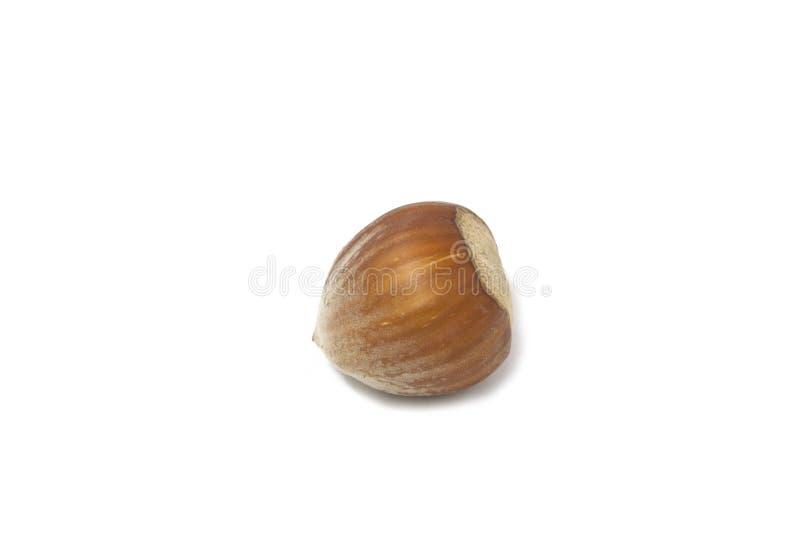απομονωμένο φουντουκιά καρύδι στοκ φωτογραφία με δικαίωμα ελεύθερης χρήσης