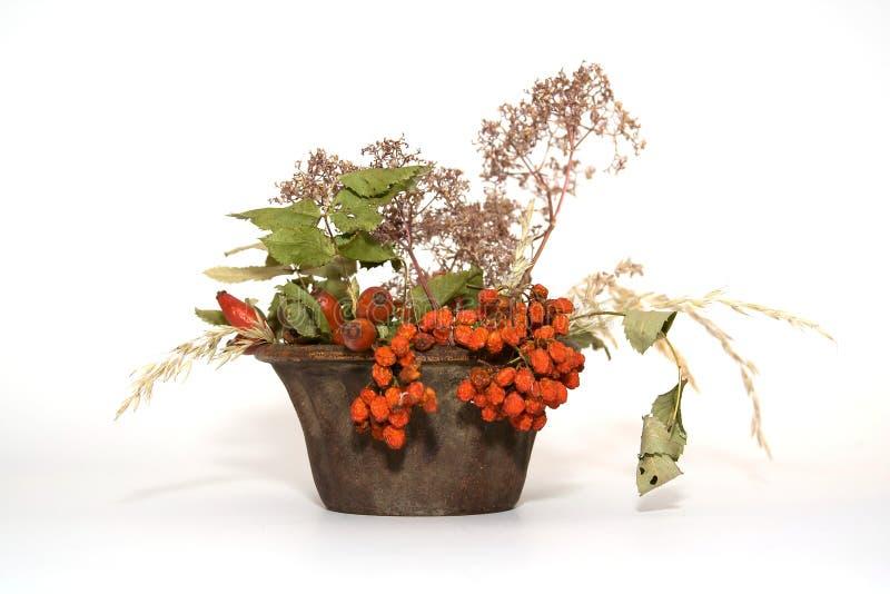 απομονωμένο φυτό στοκ εικόνα με δικαίωμα ελεύθερης χρήσης