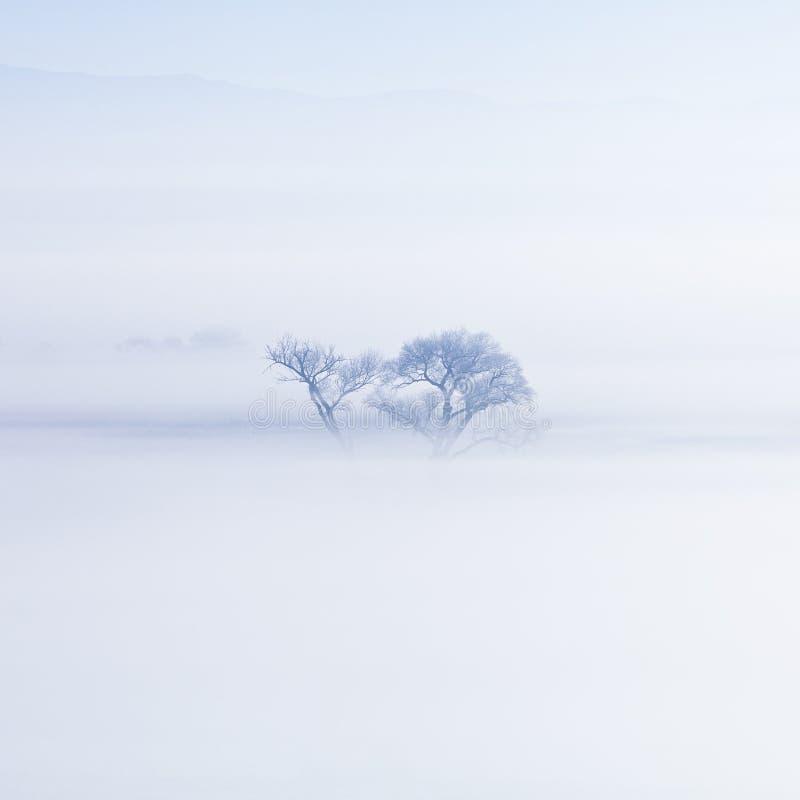 Απομονωμένο χειμερινό χιονώδες ομιχλώδες δέντρο στοκ φωτογραφίες με δικαίωμα ελεύθερης χρήσης