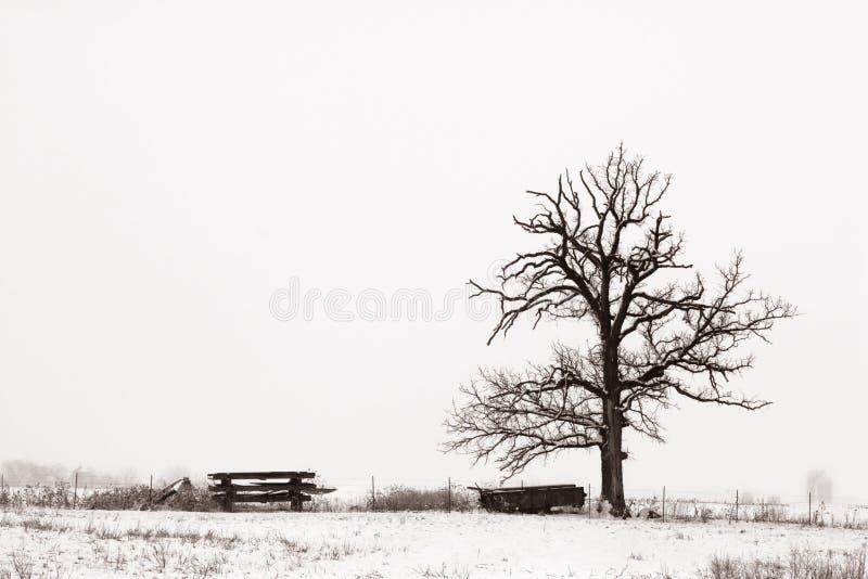 απομονωμένο χιονώδες δέντ στοκ εικόνες με δικαίωμα ελεύθερης χρήσης