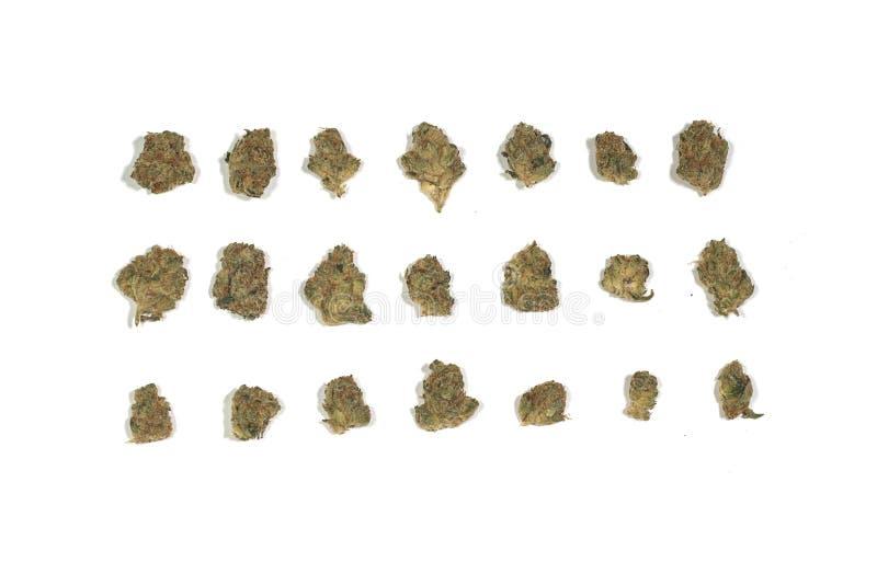 Αποξηραμένα μπουμπούκια και άνθη μαριχουάνας από κάνναβη απομονωμένα σε λευκό φόντο στοκ εικόνες με δικαίωμα ελεύθερης χρήσης