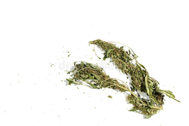 Αποξηραμένα φυτά μαριχουάνας φυτό κάνναβης στέμφυλα απομονωμένα σε λευκό στοκ φωτογραφία