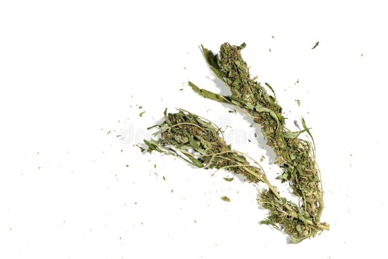 Αποξηραμένα φυτά μαριχουάνας φυτό κάνναβης στέμφυλα απομονωμένα σε λευκό στοκ φωτογραφία με δικαίωμα ελεύθερης χρήσης