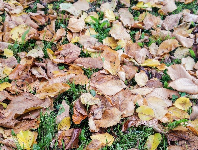 Αποξηραμένα φύλλα στο γρασίδι στοκ φωτογραφία