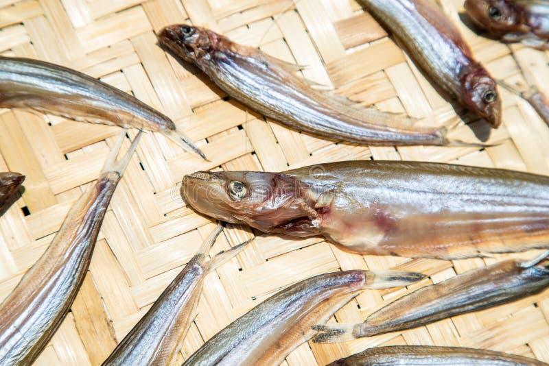 Αποξηραμένα ψάρια που ξεραίνουν στον ήλιο στον πίνακα μπαμπού, ταϊλανδικά τρόφιμα στοκ εικόνα με δικαίωμα ελεύθερης χρήσης