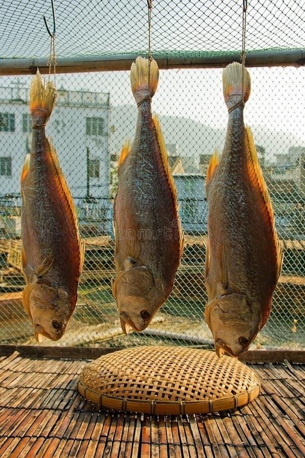 αποξηραμένα ψάρια που συν&tau στοκ φωτογραφία με δικαίωμα ελεύθερης χρήσης