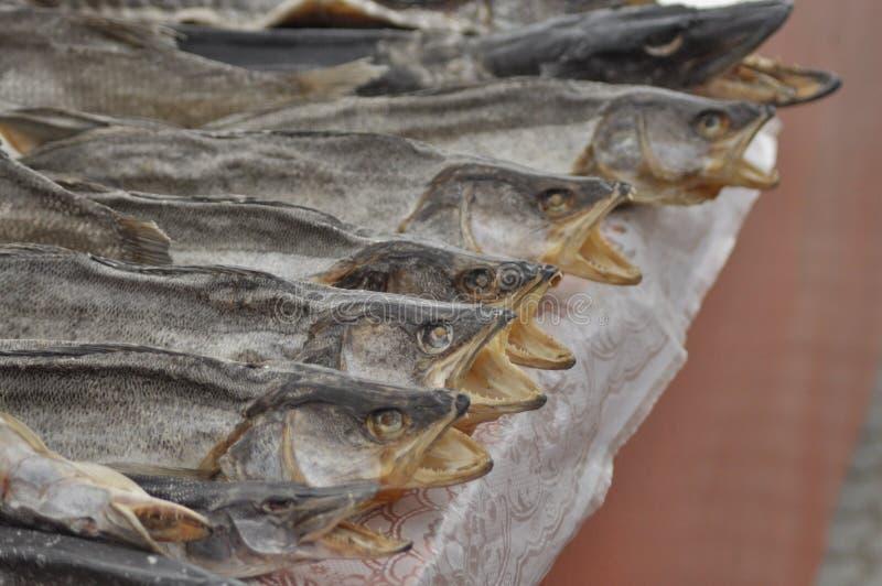 Αποξηραμένα ψάρια στην αγορά Λιχουδιά, λίμνες Ουκρανία πρόχειρων φαγητών στοκ φωτογραφίες με δικαίωμα ελεύθερης χρήσης