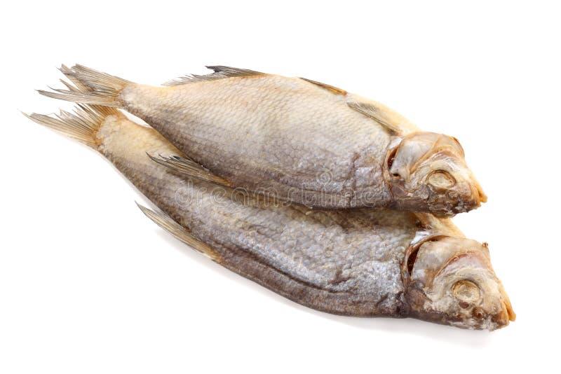 Αποξηραμένα ψάρια στο άσπρο υπόβαθρο Έννοια ζυθοποιείων μπύρας Ανασκόπηση μπύρας στοκ εικόνες