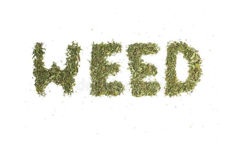 Αποξηραμένες φυτείες μαριχουάνας κάνναβης στοκ εικόνες