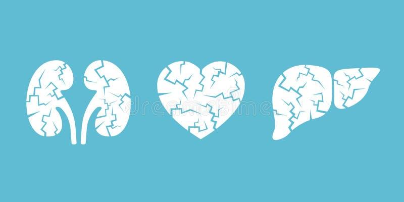 Αποτυχία και desease των νεφρών, της καρδιάς και του συκωτιού διανυσματική απεικόνιση