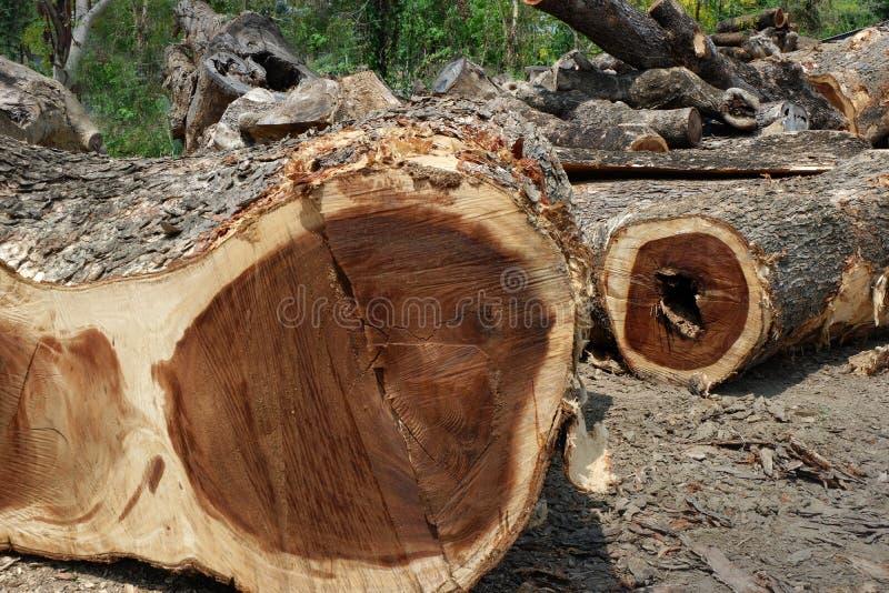 Αποδάσωση, δέντρα Cutted από το δάσος στην Ασία στοκ εικόνες