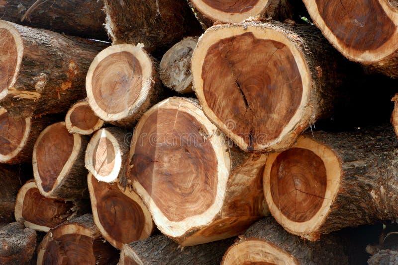 Αποδάσωση, δέντρα Cutted από το δάσος στην Ασία στοκ φωτογραφία με δικαίωμα ελεύθερης χρήσης
