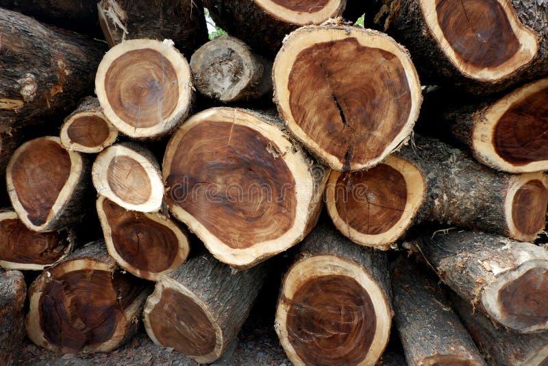 Αποδάσωση, δέντρα Cutted από το δάσος στην Ασία στοκ φωτογραφίες