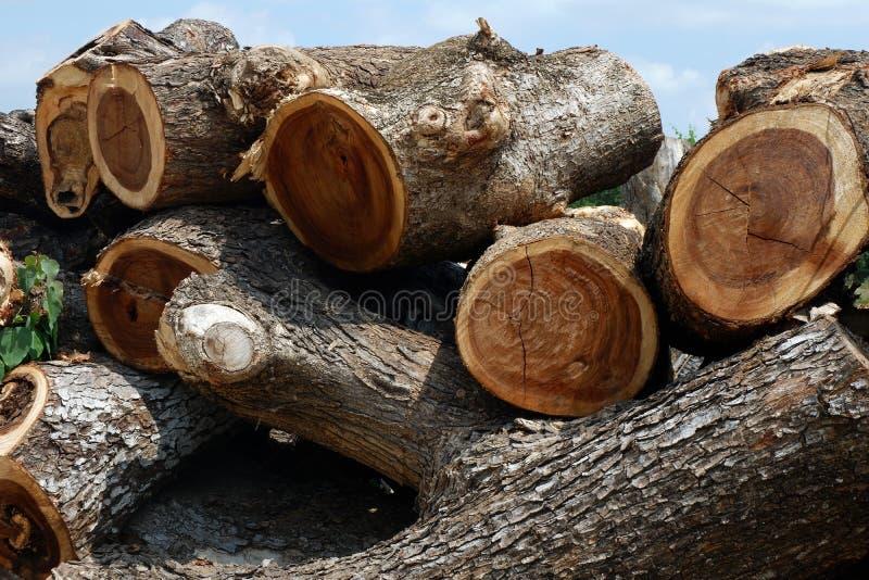 Αποδάσωση, δέντρα Cutted από το δάσος στην Ασία στοκ εικόνες με δικαίωμα ελεύθερης χρήσης