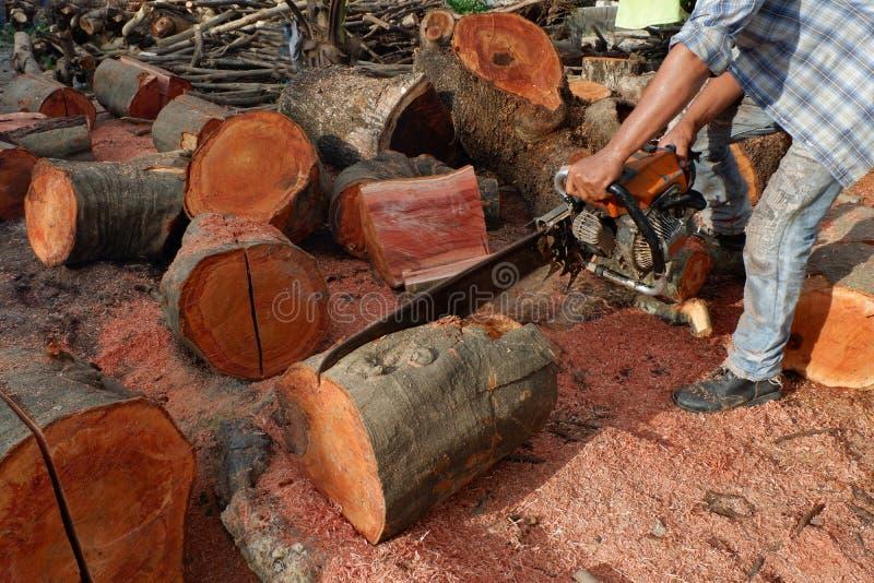 Αποδάσωση, δέντρα Cutted από το δάσος στη Νοτιοανατολική Ασία στοκ εικόνα με δικαίωμα ελεύθερης χρήσης