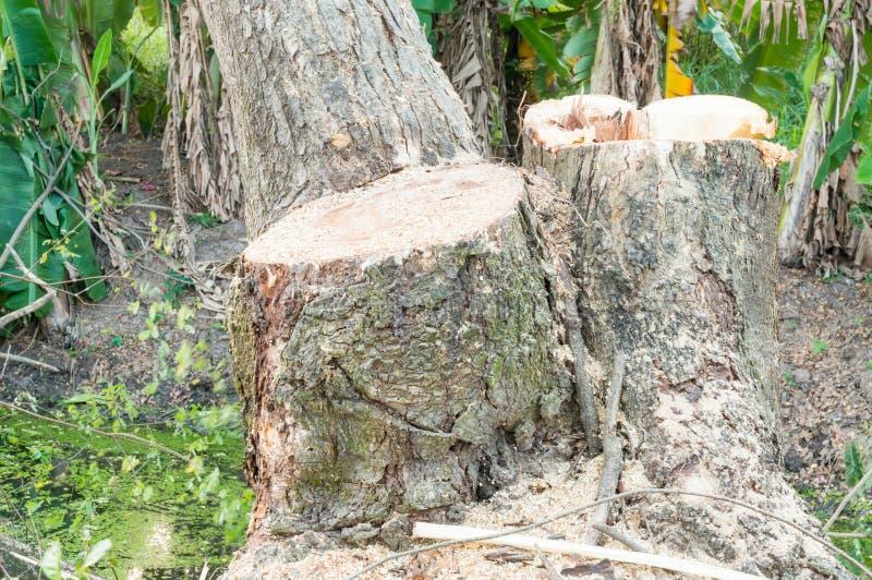 Αποδάσωση, ξυλεία στοκ φωτογραφίες με δικαίωμα ελεύθερης χρήσης