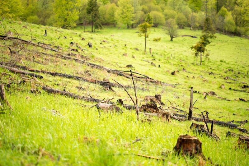 Αποδάσωση στα βουνά Carpathians στοκ εικόνες
