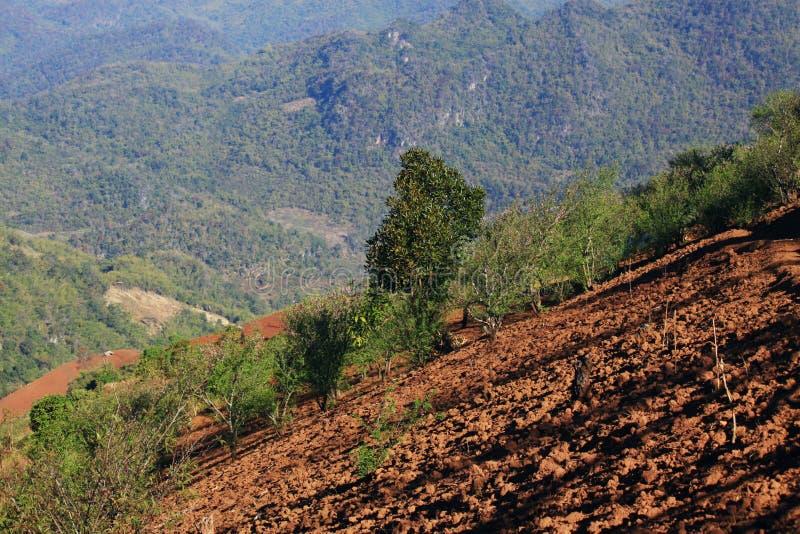 Αποδάσωση στο βουνό στοκ φωτογραφία