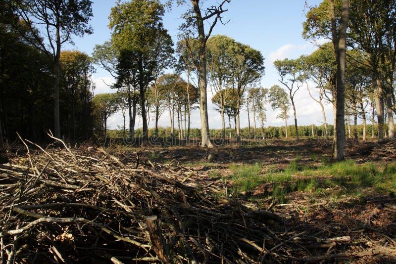 Αποδάσωση στο δρύινο δάσος στη Γαλλία στοκ φωτογραφίες με δικαίωμα ελεύθερης χρήσης